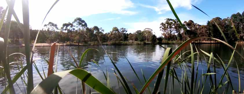 Calembeen Park Fishing Guide