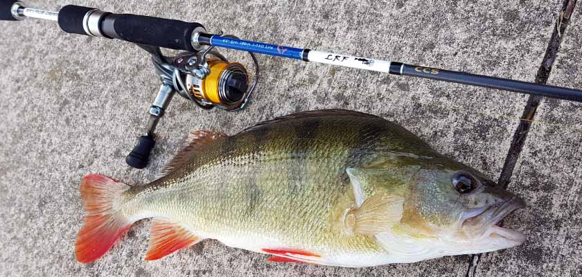 Savage LRF rods are great on redfin