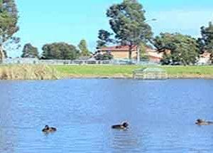 roxburghpark