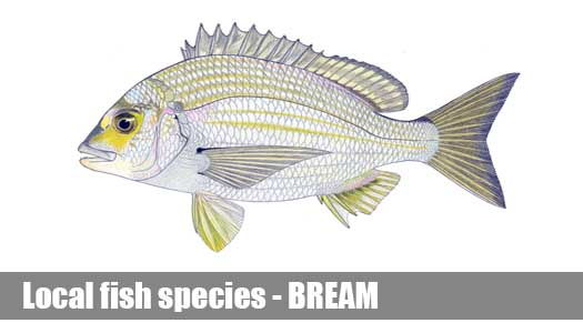 Bream species fishing guide