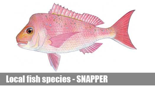 Snapper Fishing Guide Victoria