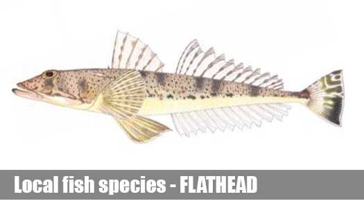 Flathead Fishing Guide Victoria
