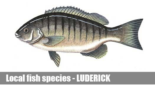 LUDERICK