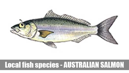 Fish species Aussie salmon
