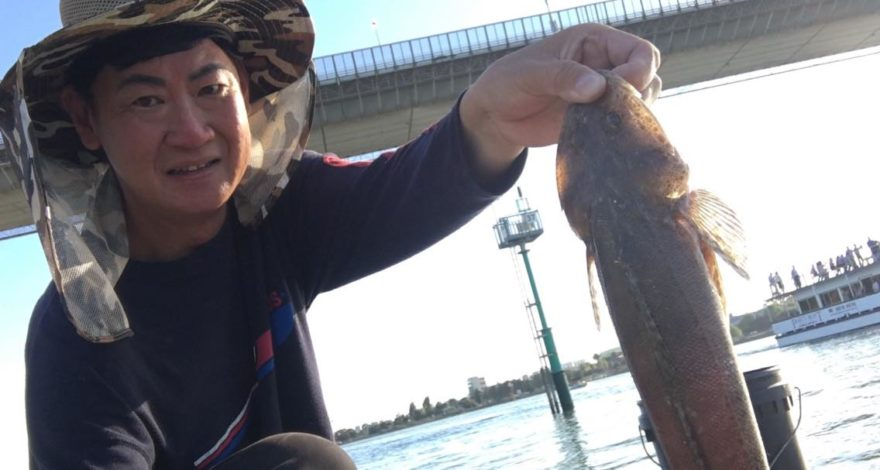 West Gate Bridge Flathead fishing