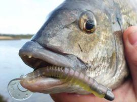 The best soft plastics for bream