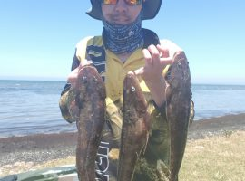 Campbells Cove Whiting fishing report