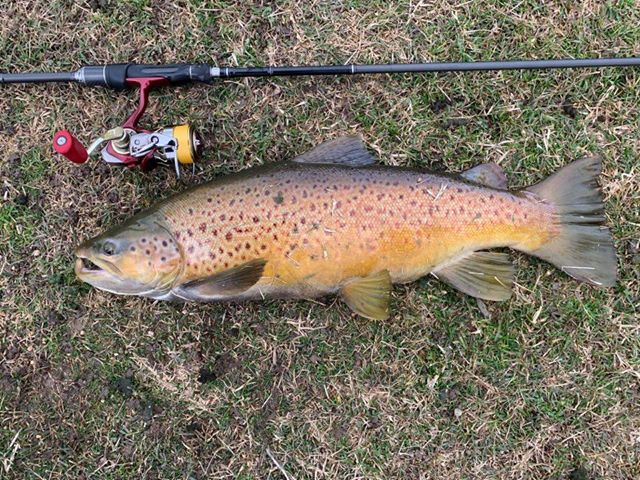 Lake Wendouree Trout fishing