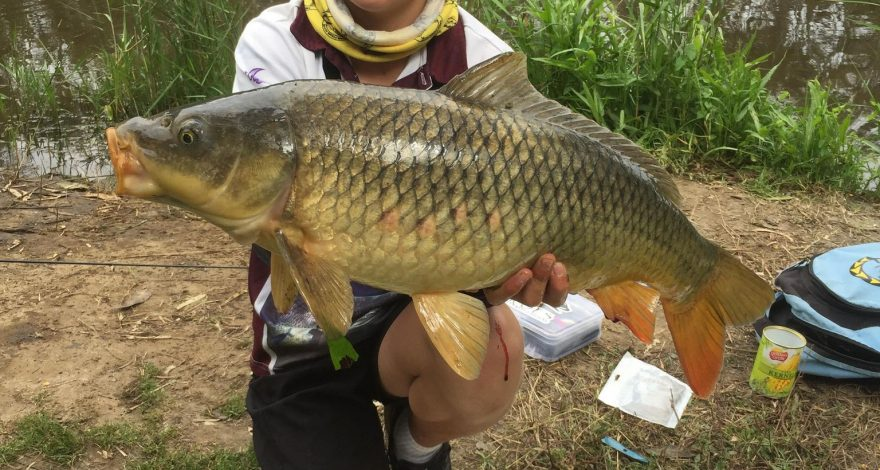 Barwon River carp fishing