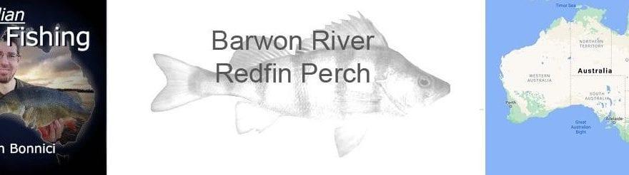 Barwon River Redfin