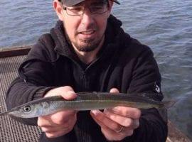 Garfish Fishing around Melbourne